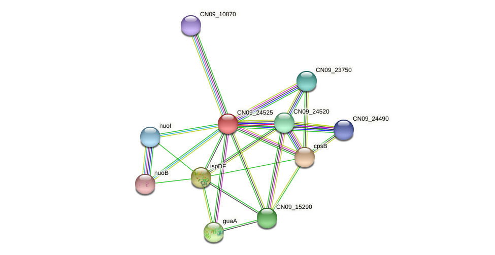 CN09_24525 protein (Agrobacterium rhizogenes) - STRING interaction network