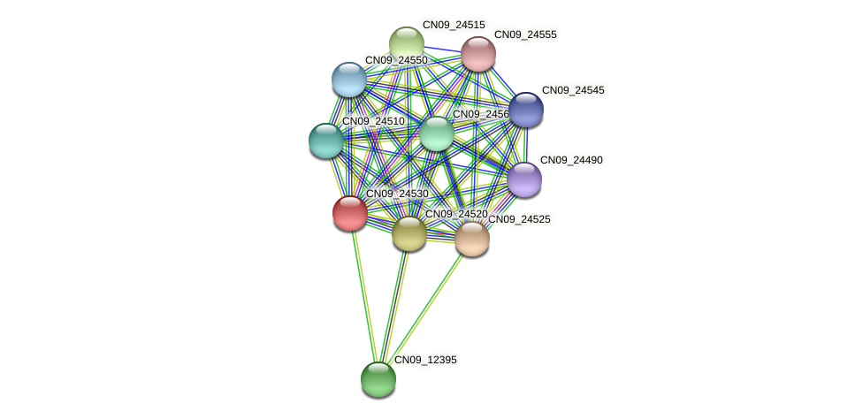 CN09_24530 protein (Agrobacterium rhizogenes) - STRING interaction network
