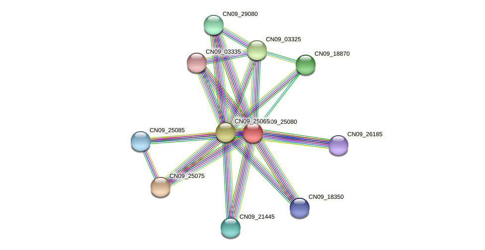 CN09_25080 protein (Agrobacterium rhizogenes) - STRING interaction network