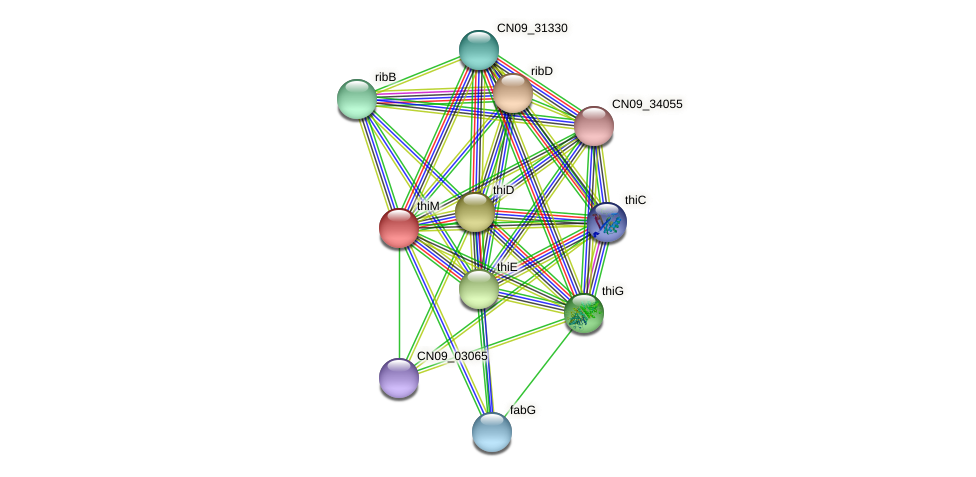 thiM protein (Agrobacterium rhizogenes) - STRING interaction network