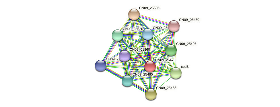 CN09_25470 protein (Agrobacterium rhizogenes) - STRING interaction network
