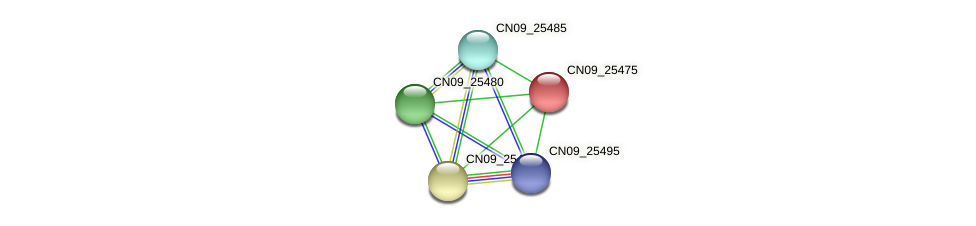 CN09_25475 protein (Agrobacterium rhizogenes) - STRING interaction network