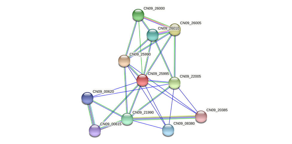 CN09_25995 protein (Agrobacterium rhizogenes) - STRING interaction network