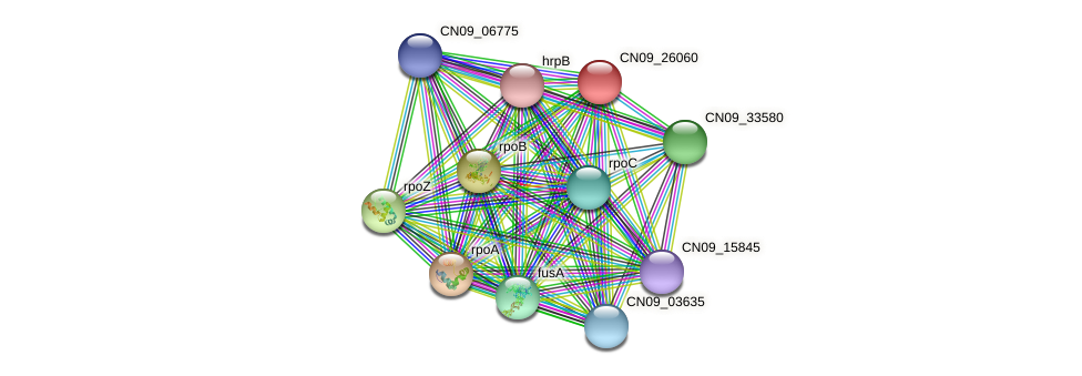 CN09_26060 protein (Agrobacterium rhizogenes) - STRING interaction network