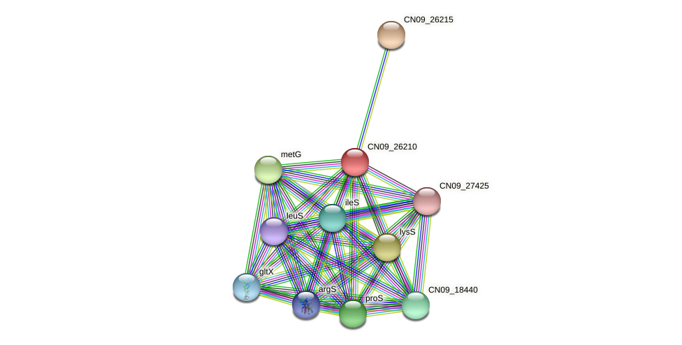 CN09_26210 protein (Agrobacterium rhizogenes) - STRING interaction network