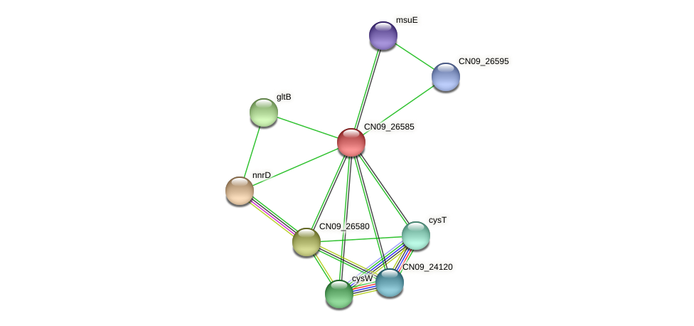 CN09_26585 protein (Agrobacterium rhizogenes) - STRING interaction network