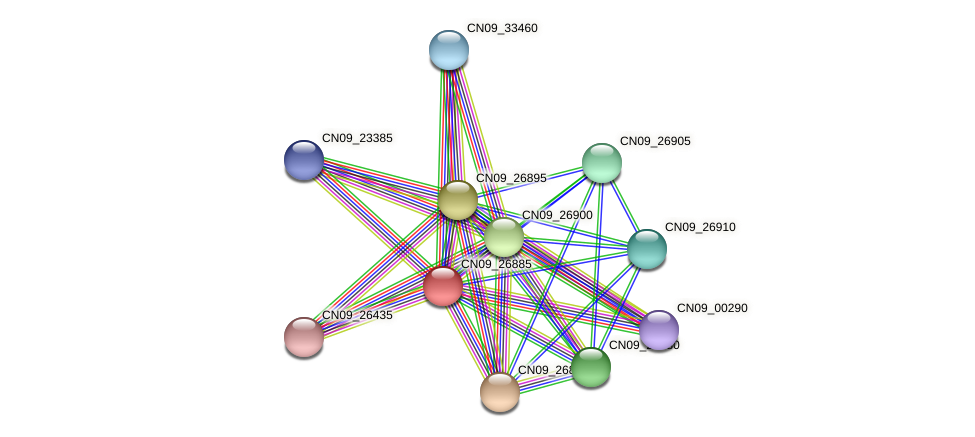 CN09_26885 protein (Agrobacterium rhizogenes) - STRING interaction network