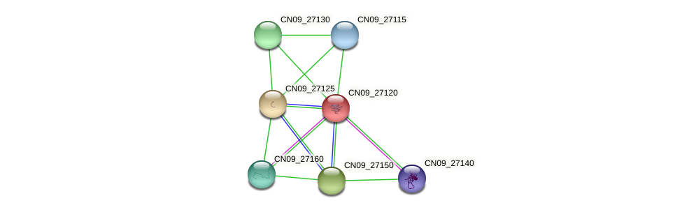 CN09_27120 protein (Agrobacterium rhizogenes) - STRING interaction network