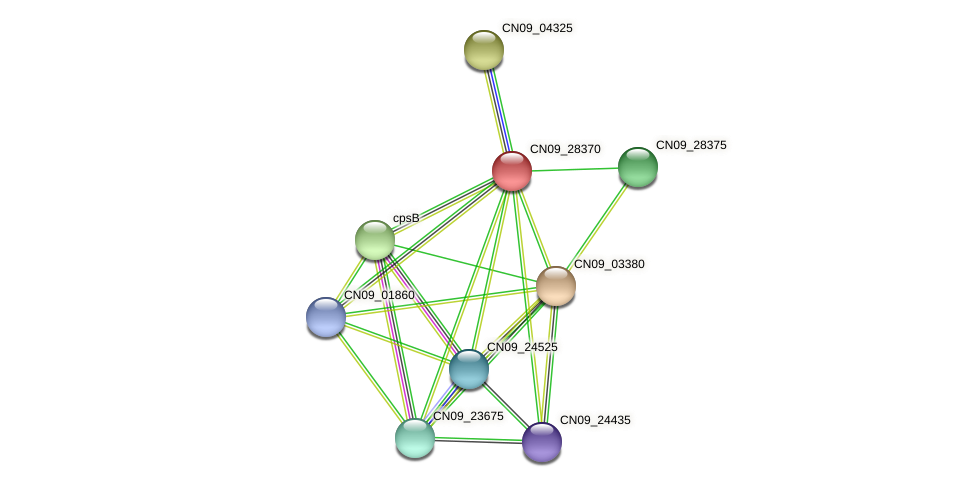 CN09_28370 protein (Agrobacterium rhizogenes) - STRING interaction network