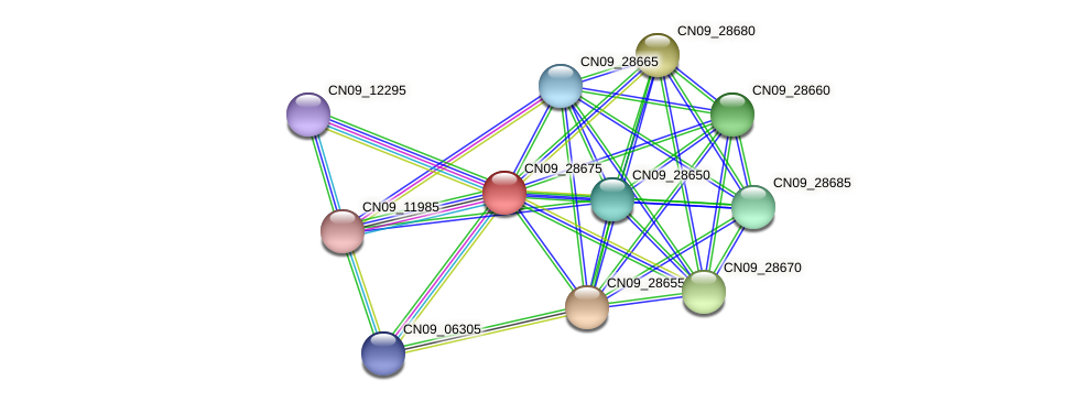 CN09_28675 protein (Agrobacterium rhizogenes) - STRING interaction network