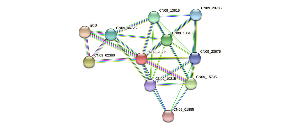 CN09_28775 protein (Agrobacterium rhizogenes) - STRING interaction network