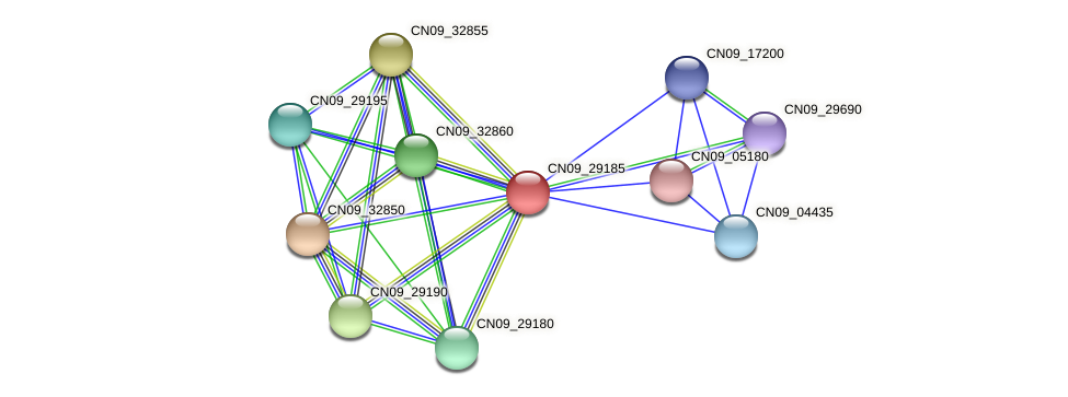 CN09_29185 protein (Agrobacterium rhizogenes) - STRING interaction network