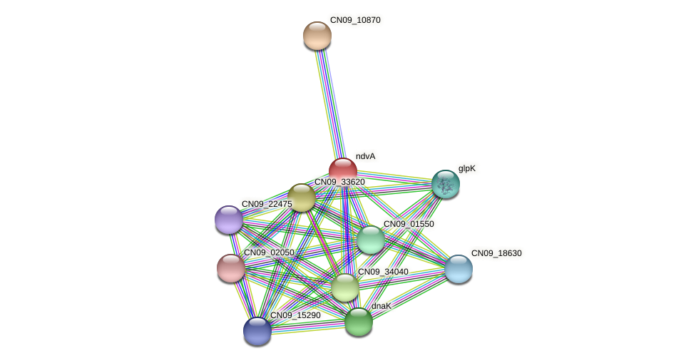 ndvA protein (Agrobacterium rhizogenes) - STRING interaction network