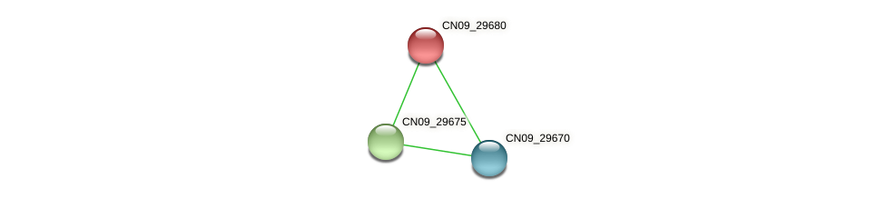 CN09_29680 protein (Agrobacterium rhizogenes) - STRING interaction network