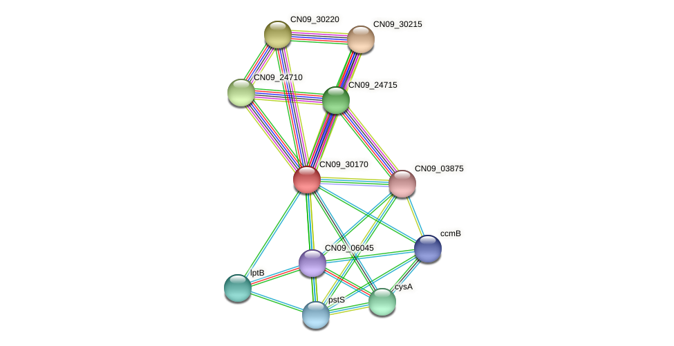 CN09_30170 protein (Agrobacterium rhizogenes) - STRING interaction network