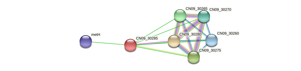 CN09_30285 protein (Agrobacterium rhizogenes) - STRING interaction network