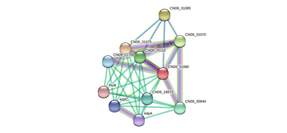 CN09_31080 protein (Agrobacterium rhizogenes) - STRING interaction network
