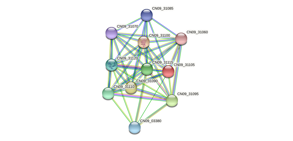 CN09_31105 protein (Agrobacterium rhizogenes) - STRING interaction network