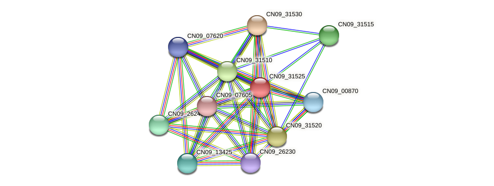 CN09_31525 protein (Agrobacterium rhizogenes) - STRING interaction network