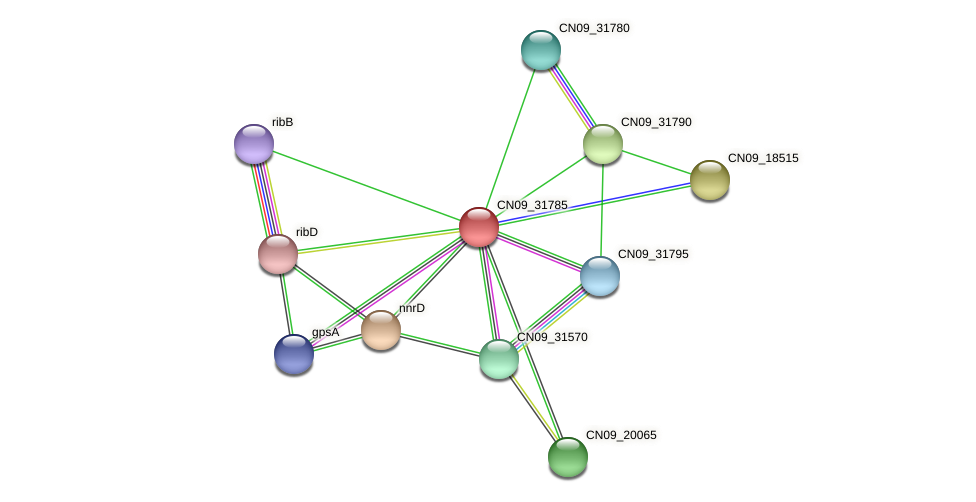 CN09_31785 protein (Agrobacterium rhizogenes) - STRING interaction network