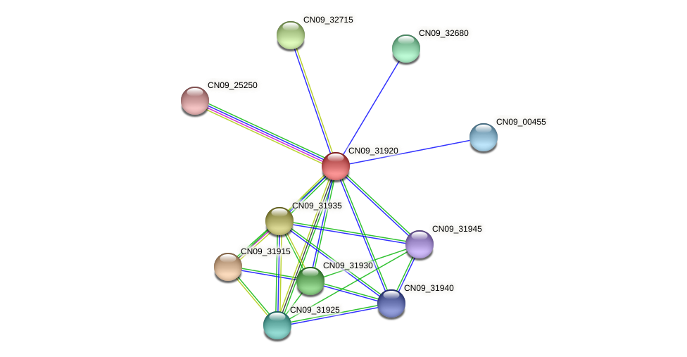 CN09_31920 protein (Agrobacterium rhizogenes) - STRING interaction network
