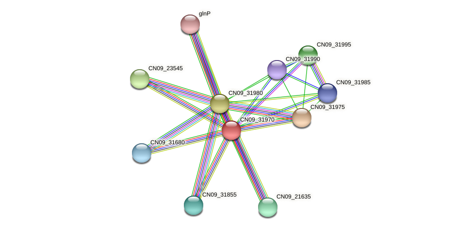 CN09_31970 protein (Agrobacterium rhizogenes) - STRING interaction network