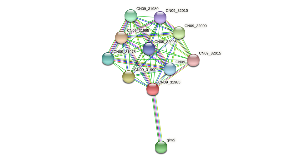 CN09_31985 protein (Agrobacterium rhizogenes) - STRING interaction network