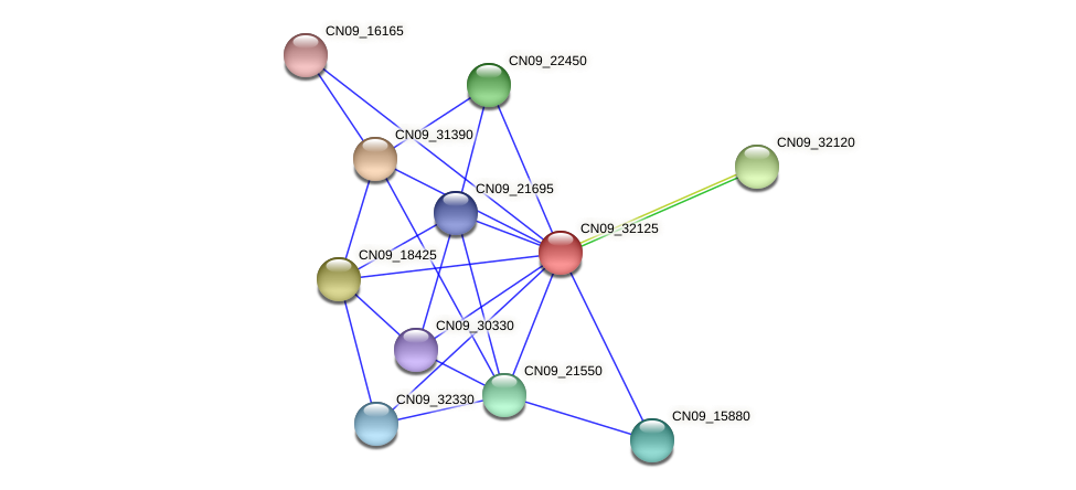 CN09_32125 protein (Agrobacterium rhizogenes) - STRING interaction network