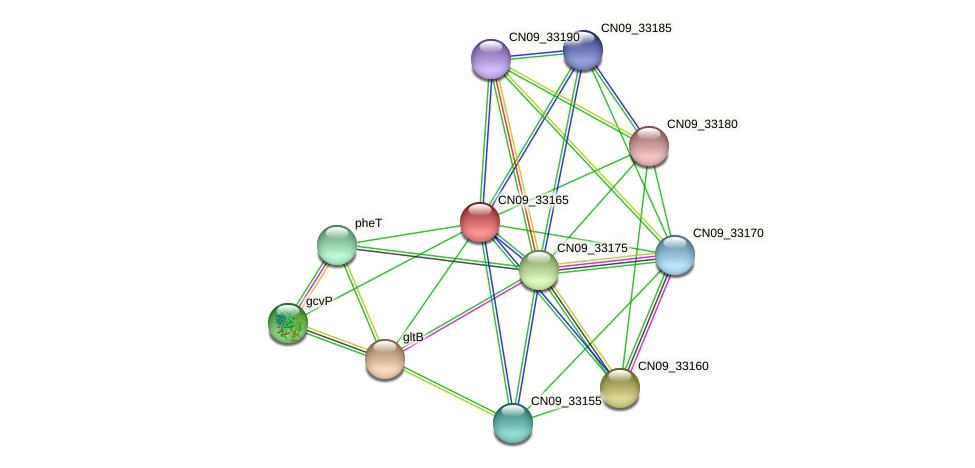 CN09_33165 protein (Agrobacterium rhizogenes) - STRING interaction network