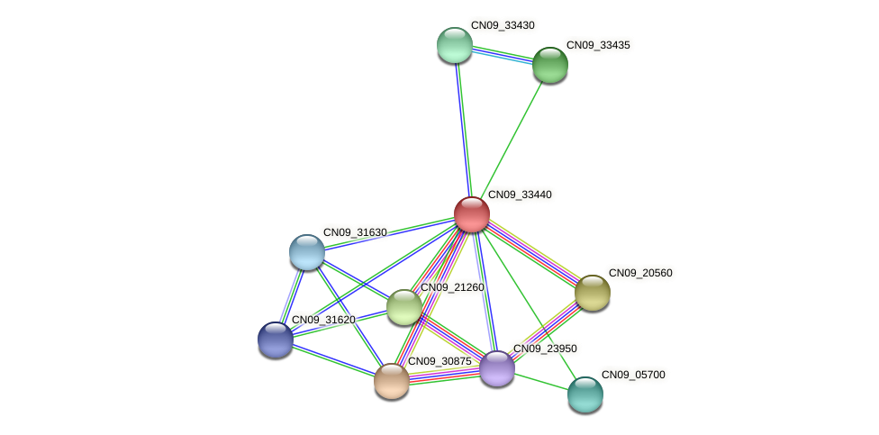CN09_33440 protein (Agrobacterium rhizogenes) - STRING interaction network
