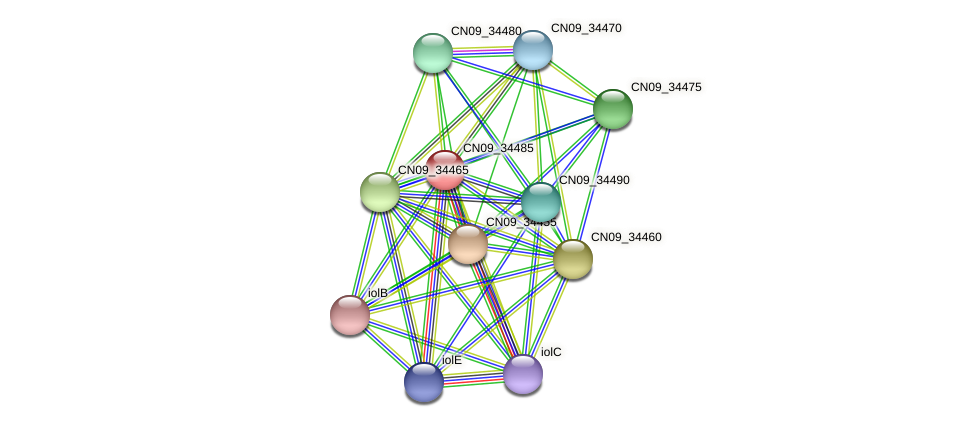 CN09_34485 protein (Agrobacterium rhizogenes) - STRING interaction network