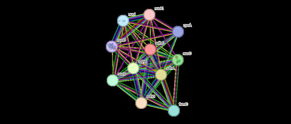 sdhC protein (Bartonella bacilliformis) - STRING interaction
