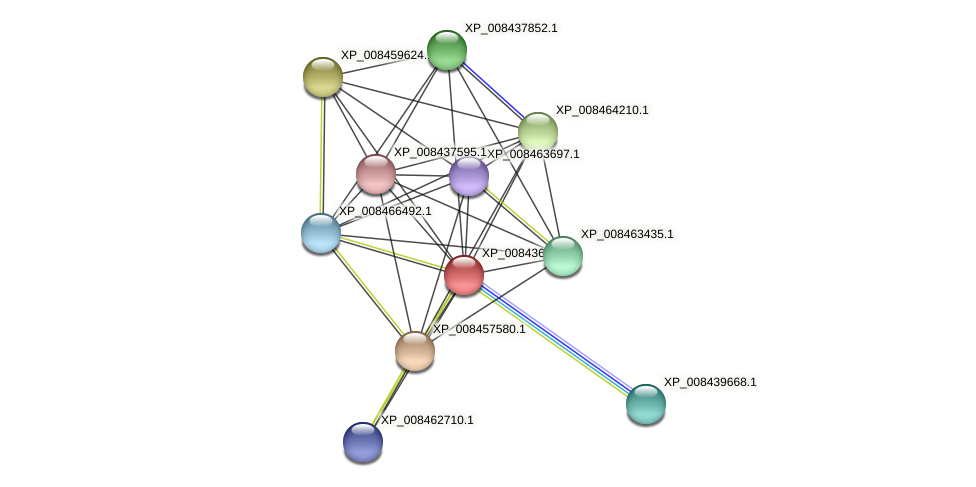 XP_008436971.1 protein (Cucumis melo) - STRING interaction network