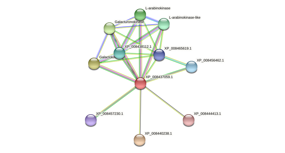 XP_008437059.1 protein (Cucumis melo) - STRING interaction network