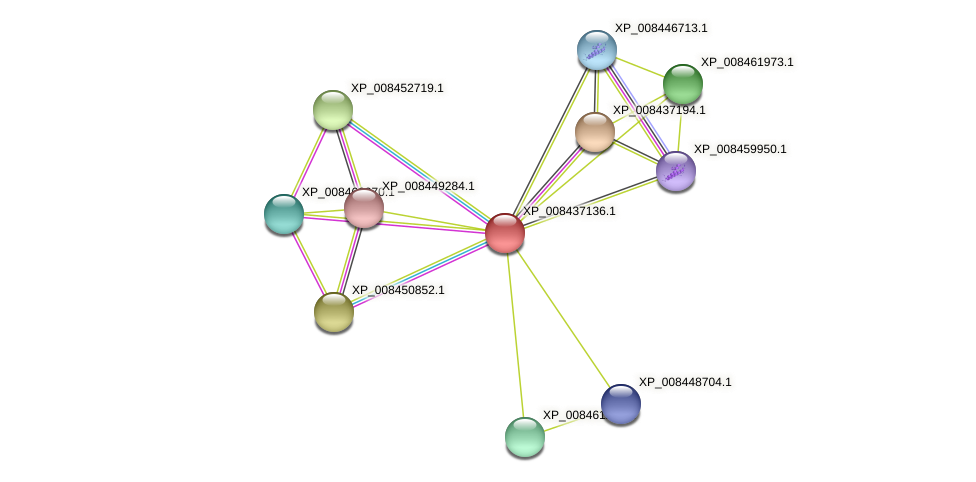 XP_008437136.1 protein (Cucumis melo) - STRING interaction network