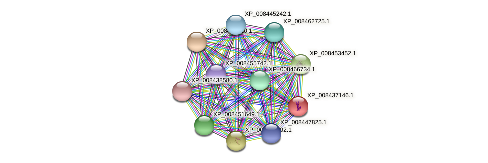 XP_008437146.1 protein (Cucumis melo) - STRING interaction network