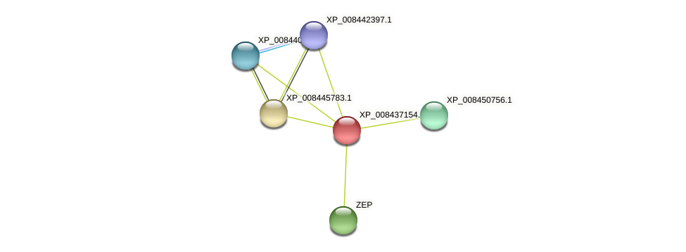 XP_008437154.1 protein (Cucumis melo) - STRING interaction network