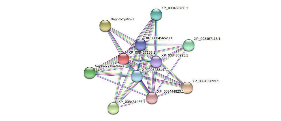 XP_008437166.1 protein (Cucumis melo) - STRING interaction network