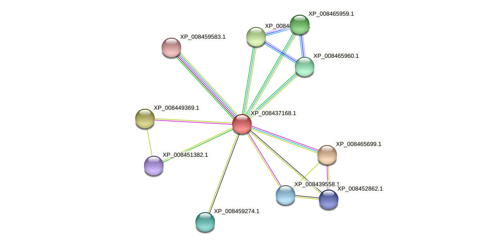 XP_008437168.1 protein (Cucumis melo) - STRING interaction network