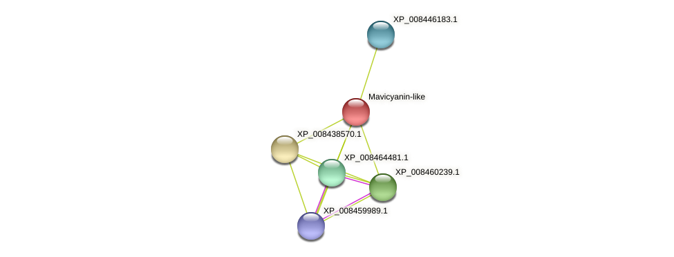 XP_008437169.1 protein (Cucumis melo) - STRING interaction network