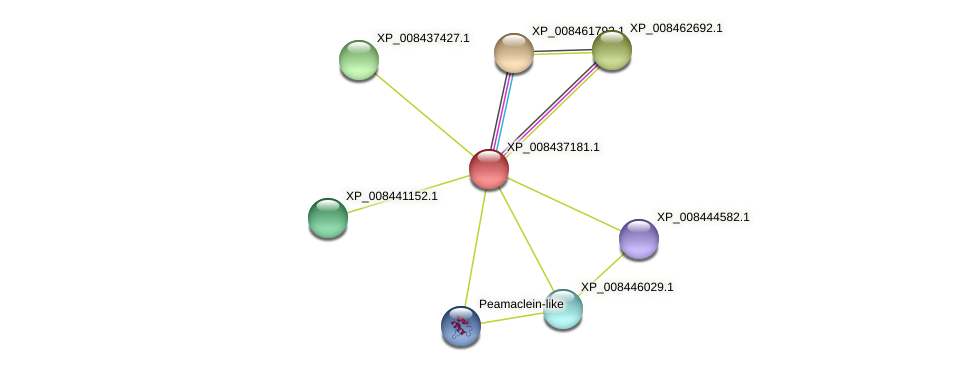 XP_008437181.1 protein (Cucumis melo) - STRING interaction network