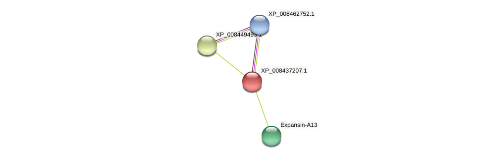 XP_008437207.1 protein (Cucumis melo) - STRING interaction network