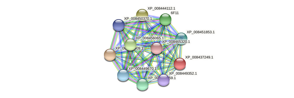 XP_008437249.1 protein (Cucumis melo) - STRING interaction network