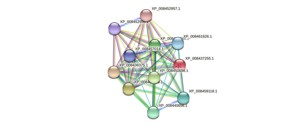 XP_008437255.1 protein (Cucumis melo) - STRING interaction network