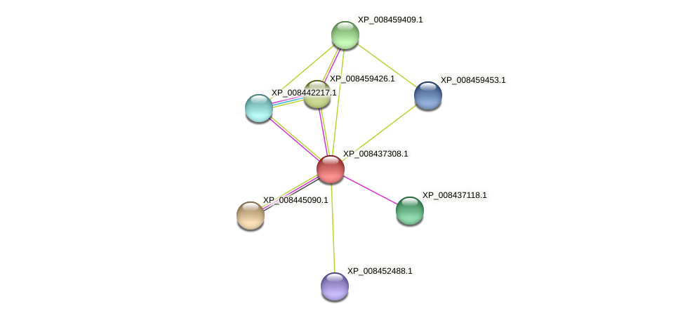 XP_008437308.1 protein (Cucumis melo) - STRING interaction network