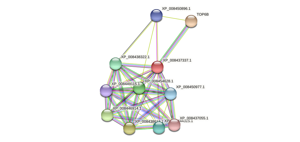 XP_008437337.1 protein (Cucumis melo) - STRING interaction network