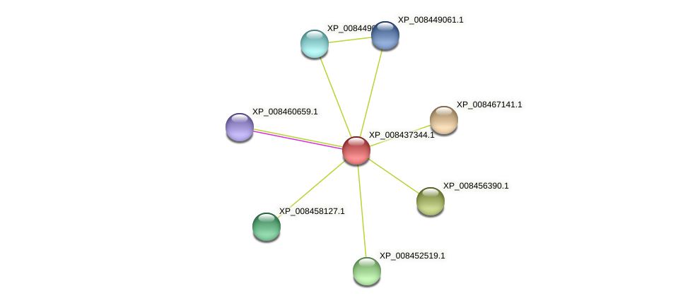 XP_008437344.1 protein (Cucumis melo) - STRING interaction network