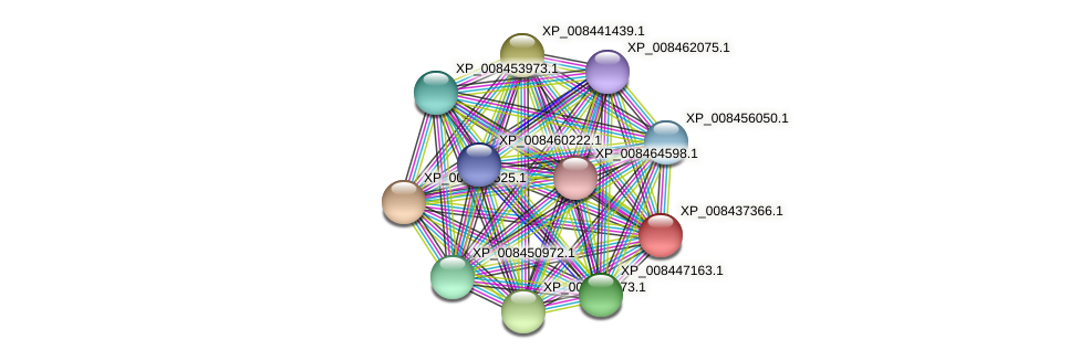 XP_008437366.1 protein (Cucumis melo) - STRING interaction network