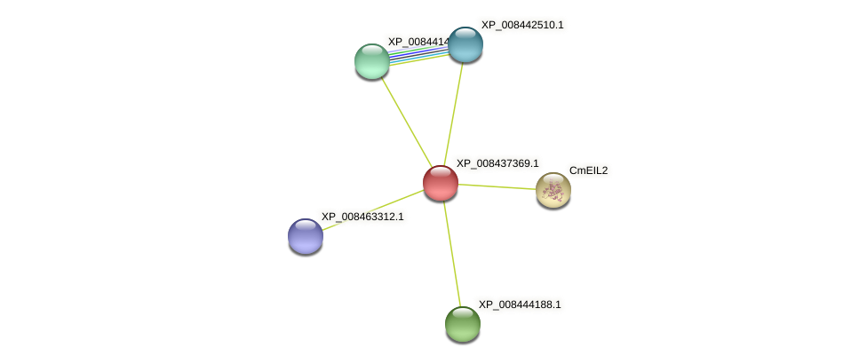 XP_008437369.1 protein (Cucumis melo) - STRING interaction network