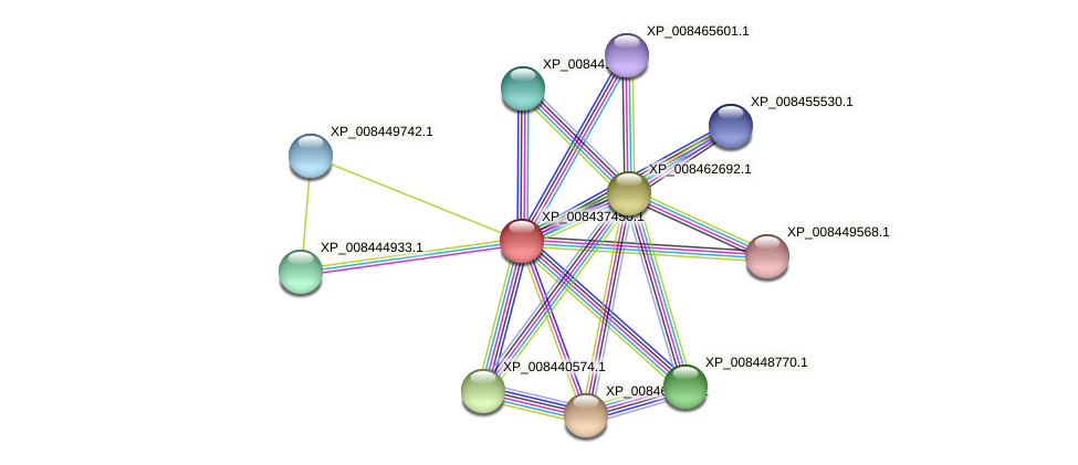 XP_008437450.1 protein (Cucumis melo) - STRING interaction network